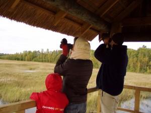 Putnu vērošana CEMEX putnu tornī Kaņiera ezerā. Autore I.Vanaga